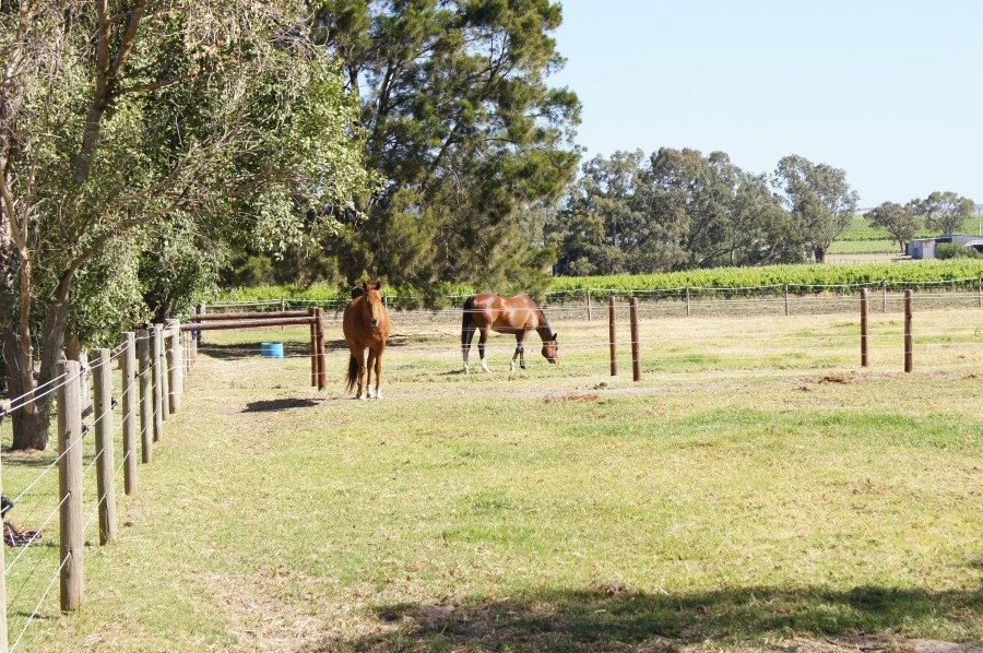 Horses feeding in one of our paddocks.