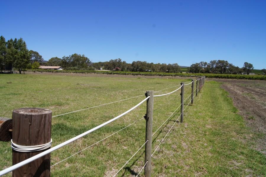 outdoor-yards_DSC02561.JPG