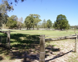 outdoor-yards_DSC02555.JPG